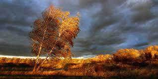 Es ist Herbst – was tun bei Unwetter?